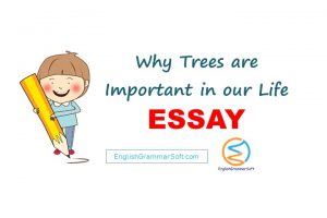 Essay on Why Trees are Important in our Life