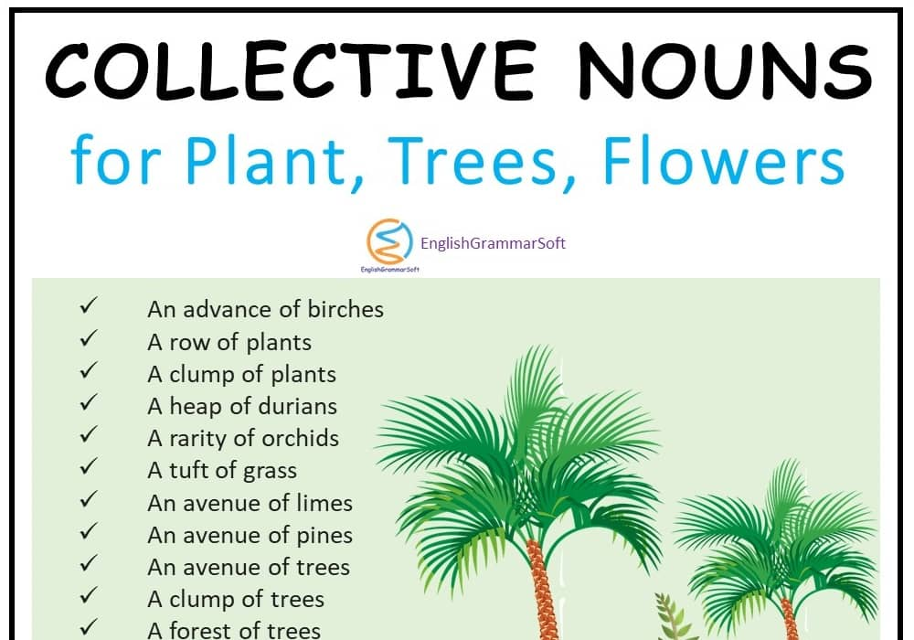Collective Nouns for Plants and Trees